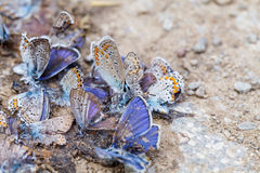 Destroyed butterfly family Stock Photography