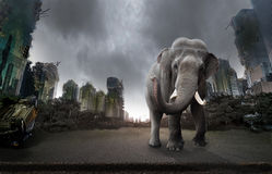 Destroyed city and an elephant stock photo