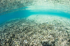 Destroyed Coral Reef Stock Image