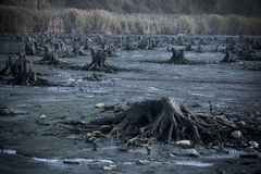 Destroyed forest and area. Destroyed forest landscape shot from the ground stock image