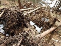 Destroyed forest as an effect of strong storm royalty free stock photo