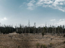 Destroyed Forest. Forest destroyed by human interference Royalty Free Stock Photo