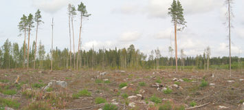 Destroyed forest panorama Royalty Free Stock Photos