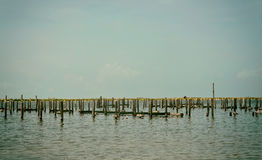 Destroyed Pier and Boat Dock Royalty Free Stock Image