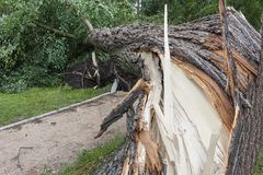 Damages after the storm and a hurricane Stock Photos