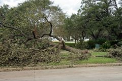 Destroyed Tree. A large oak tree that fell during Hurricane Ike Royalty Free Stock Photography