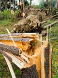 Destroyed Trees in a Clearing Stock Photos