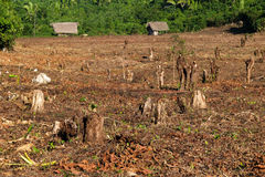 Destroyed tropical forest. Stock Photos
