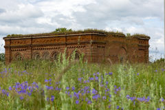 Destroyed the unfinished Church of red brick in a clearing among. The green grass and blue flowers Royalty Free Stock Photography