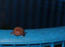 Destroyer d'usines de jardin, escargot, sur un grand panier bleu de déchets Photos libres de droits