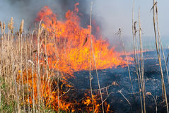Destroyer du feu Image stock