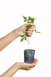 Destroying plant Royalty Free Stock Photography