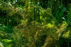 Destruído mal por insetos perfurou as folhas disparadas perto acima na natureza selvagem no fundo borrado foto de stock royalty free