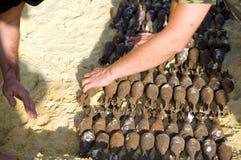 Destrucción de los shelles Imagen de archivo libre de regalías