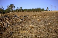 Destrucción del bosque Foto de archivo libre de regalías
