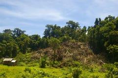 Destrucción del bosque Imagen de archivo libre de regalías