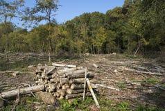 Destrucción del daño medioambiental de la tala de árboles del bosque foto de archivo libre de regalías