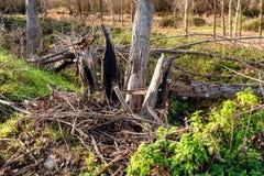 Destrucción natural de árboles en el bosque imágenes de archivo libres de regalías