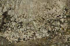 Destruction of concrete wall  background Royalty Free Stock Photography