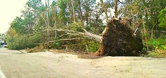Destruction d'ouragan Photos stock