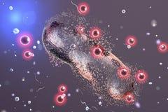 Destruction d'une bactérie par les nanoparticles argentés illustration libre de droits