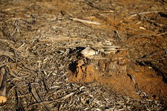 Destruction de forêt Image libre de droits