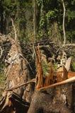 Destruction de forêt photo libre de droits