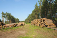 Destruction of forests Royalty Free Stock Photography