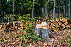 Deforestation of deciduous forests. stock image