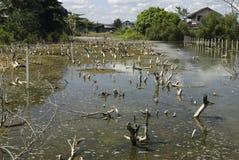 Destruction of mangrove Royalty Free Stock Image