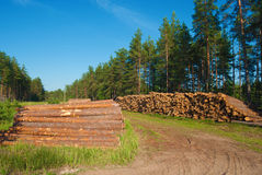 Destruction of nature. Destruction forests death green human activities Royalty Free Stock Image