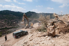 Destruction of Palestinian Olive Groves. AL-WALAJA, OCCUPIED PALESTINIAN TERRITORIES - SEPTEMBER 5: An Israeli Border Police soldier guards earth-moving stock images