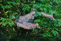 Destruction of tree branch by web worm nest. How a web worm can destroy tree sections Stock Photos