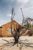 Destructive nature. Fire burnt devastating Stock Images