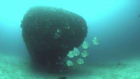 Destruição com uma escola dos peixe-espadas Batfish vídeos de arquivo