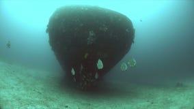 Destruição com uma escola dos peixe-espadas Batfish filme