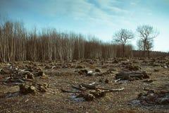 Destruição da floresta Fotos de Stock