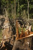 Destruição da floresta foto de stock royalty free