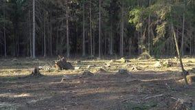 A destruição da natureza, desflorestamento em Europa vídeos de arquivo
