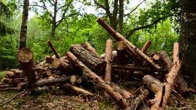 Destruição das árvores da lenha Floresta no ínterim do tempo firewood Lapso de tempo vídeos de arquivo