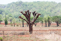 A destruição das florestas para o cultivo de deslocamento imagens de stock