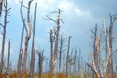 Destruição de Katrina fotografia de stock royalty free