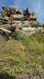 Destruição de madeira da natureza da mão de obra da madeira Fotos de Stock Royalty Free