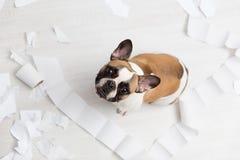 Destruição home do animal de estimação no assoalho branco do banheiro com alguma parte de papel higiênico Foto abstrata dos cuida fotos de stock