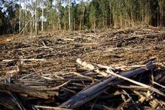Destruição da floresta Imagem de Stock