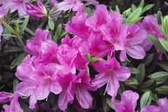 Deszczów kwiaty zdjęcie stock