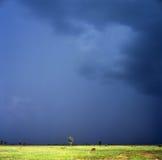 deszcz Obrazy Royalty Free