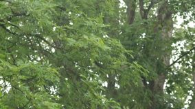 deszcz zdjęcie wideo