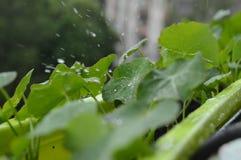 Deszcz kropel pluśnięcie na zielonym kwiacie obraz royalty free