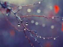 Deszcz krople na gałąź Fotografia Stock